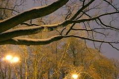 温特帕克,夜照明设备,点燃发光,雪在分支,冬天,冬景花园的魔术 免版税图库摄影