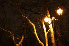 温特帕克,夜照明设备,点燃发光,雪在分支,冬天,冬景花园的魔术 图库摄影