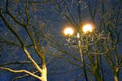 温特帕克,夜照明设备,点燃发光,雪在分支,冬天,冬景花园的魔术 免版税库存照片