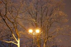 温特帕克,夜照明设备,点燃发光,雪在分支,冬天,冬景花园的魔术 免版税库存图片