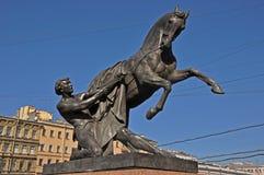 温驯马在圣彼德堡 库存照片