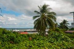 港区和棕榈树 山打根,婆罗洲,沙巴,马来西亚 库存图片
