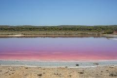 港格里的,澳大利亚西部,澳大利亚桃红色湖小屋盐水湖 图库摄影