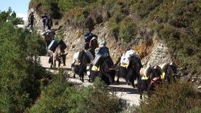 游人、搬运工和牦牛在足迹在喜马拉雅山 影视素材