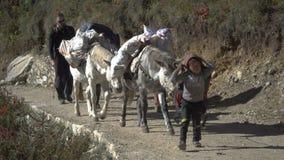 游人、搬运工和牦牛在足迹在喜马拉雅山 股票视频