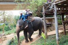 游人乘坐大象1 库存图片