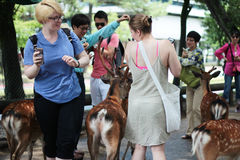 游人享用与鹿的曲奇饼在sideway 免版税库存图片