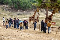 游人参观城市动物园徒步旅行队 库存图片