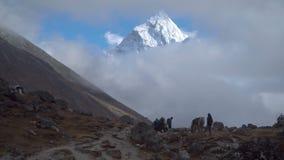游人和搬运工在喜马拉雅山 影视素材