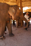 游人喂养一头大象 免版税库存图片