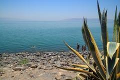 游人在加利利海附近探索,一的边缘游泳入水,在迦百农 库存图片