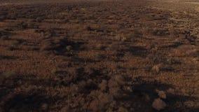 游人在大草原去在非洲 股票录像