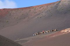 游人在沙漠,兰萨罗特岛,西班牙乘坐骆驼 免版税库存照片