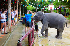 游人在泰国观看大象显示在Phang Nga胡闹  大象亲吻谢意的一个人食物的 免版税库存照片