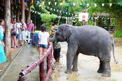 游人在泰国观看大象显示在Phang Nga胡闹  大象亲吻谢意的一名妇女食物的 免版税图库摄影