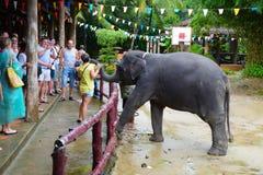 游人在泰国观看大象显示在Phang Nga胡闹  大象亲吻谢意的一名妇女食物的 免版税库存图片
