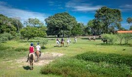 游人在潘塔纳尔湿地沼泽地享用乘驾马 免版税库存照片