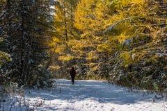 游人在积雪的路去在森林里 免版税图库摄影