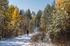 游人在积雪的路去在森林里 免版税库存照片