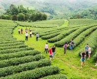 游人在茶农场 库存图片