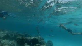 游人在鱼中潜航并且潜水在珊瑚附近 影视素材