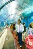 游人在水族馆-巴塞罗那,西班牙的手表鱼 免版税库存照片