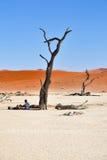 游人在Deadvlei, Namib-Naukluft国家公园,纳米比亚, Afri 免版税库存图片