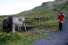年轻游人拍摄冰岛马 库存图片
