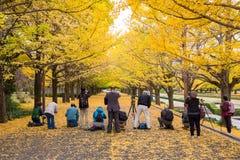 游人拍黄色银杏树叶子的照片 库存图片