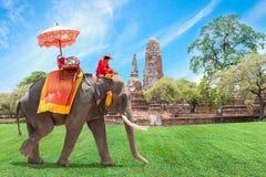 游人的大象在阿尤特拉利夫雷斯,泰国 免版税库存图片