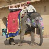 游人的大象琥珀色的堡垒的斋浦尔印度 图库摄影
