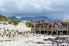 游人观察在冰砾海滩的非洲企鹅 免版税库存图片
