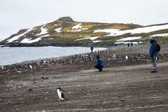 游人观看在gentoo企鹅Pygoscelis中巴布亚,南极洲繁殖的殖民地的一个小组野生生物  免版税库存照片