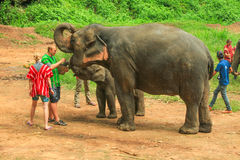 游人饲料大象 免版税图库摄影