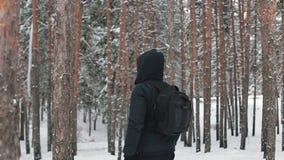 游客旅行通过森林 股票视频