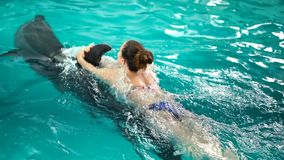游泳与海豚,训练的无法认出的年轻女人在蓝色水晶水池水中 慢的行动 自然,动物,狂放 股票录像