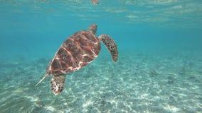 游泳与海龟在Gili海岛,印度尼西亚 股票视频