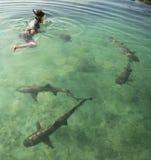 游泳与鲨鱼 库存照片