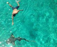 游泳与鲨鱼 库存图片