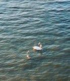 游泳和他的婴孩 库存照片