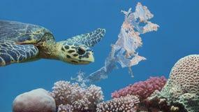 游泳在五颜六色的热带珊瑚礁上的美丽的海玳瑁污染与塑料袋 库存图片