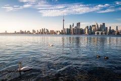 游泳在安大略湖-多伦多,安大略,加拿大的多伦多地平线和天鹅 免版税库存图片