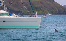 游泳在小船-费尔南多・迪诺罗尼亚群岛, Pernambuco,巴西附近的海豚 免版税库存照片