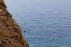 游泳在岩石小游艇船坞的一个人在克罗地亚 免版税库存照片