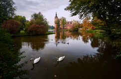 游泳在新的城堡前面的池塘的天鹅和鸭子 免版税图库摄影