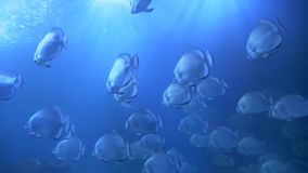 游泳在水族馆的鱼 影视素材