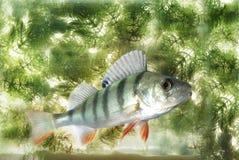 游泳在水栖息处 免版税库存照片