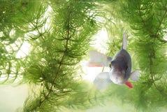 游泳在水栖息处 库存图片