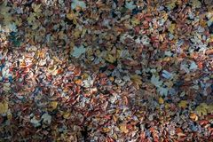 游泳在水的多彩多姿的叶子在一个湖在秋天 免版税图库摄影