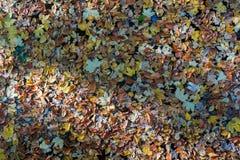 游泳在水的多彩多姿的叶子在一个湖在秋天 免版税库存图片